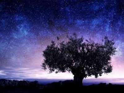 Tree with milky way behind it